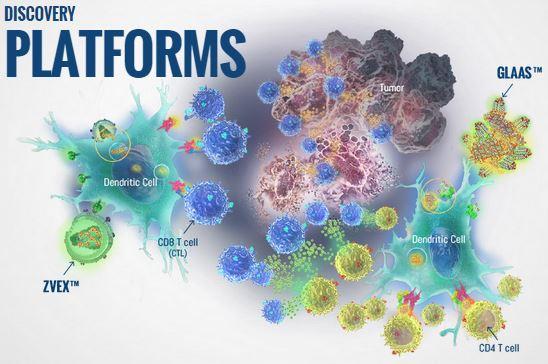 immune design