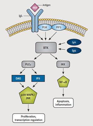 BTK-pathway