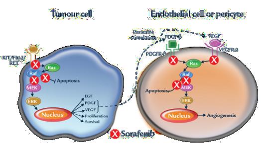 moa-tumor-cells
