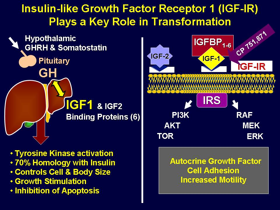 igf-1r-mechanism
