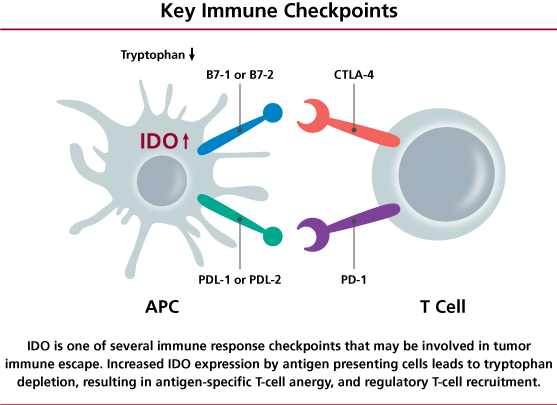 ido_pathway_inhibitors