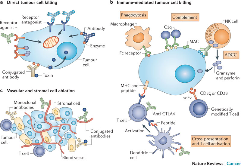 Car T Immunotherapy Review