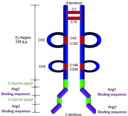 Trebananib structure
