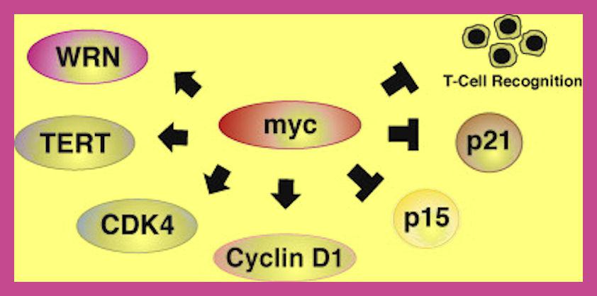oncogene-induced-senescence
