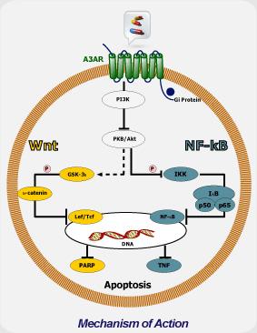 CF102-MechanizmOfAction