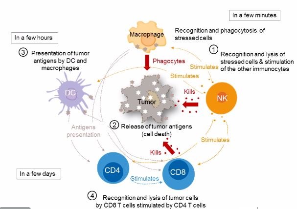 Immune Checkpoint Receptors In Regulating Immune Autos Post