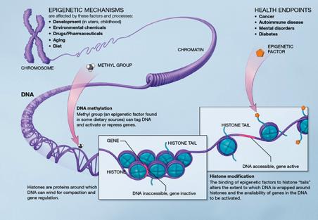 epigenetic regulation