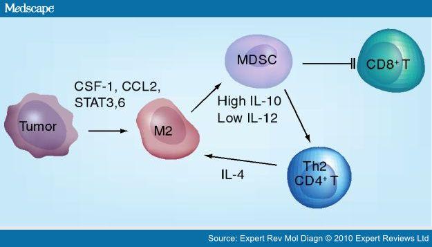 MDSC CSF-1