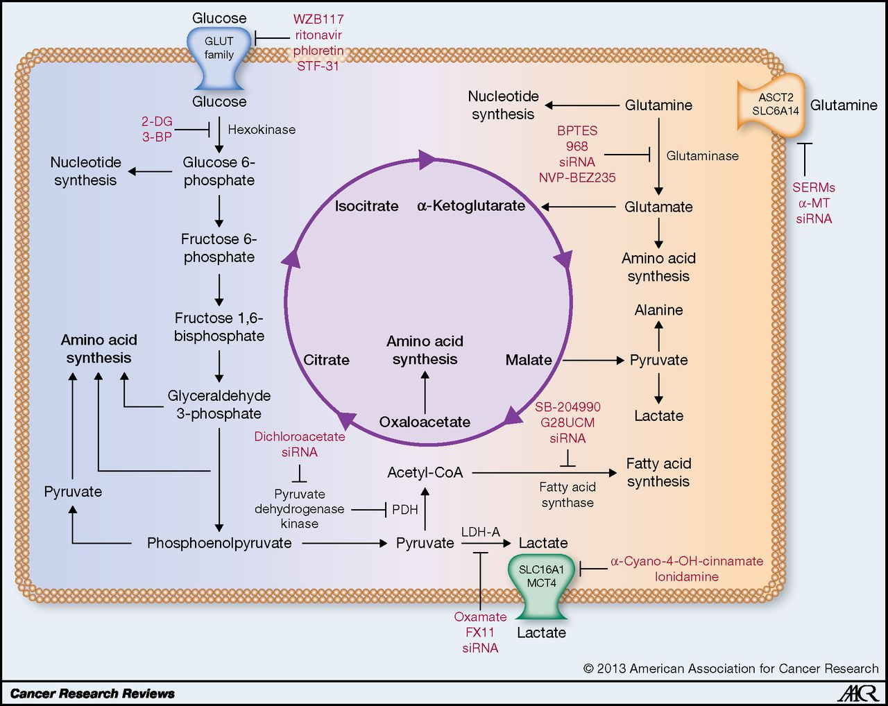 Glucose metabolism in cancer