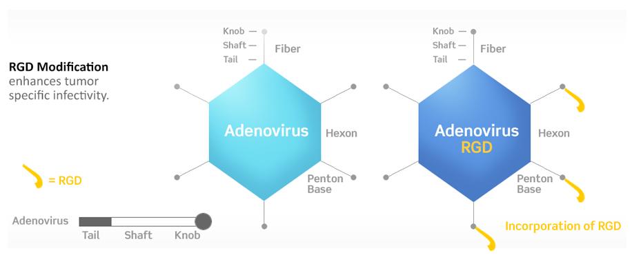 DNAtrix modified adenovirus