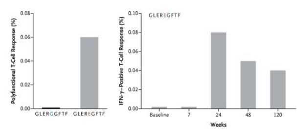 This shows the dual positive (IFN-γ and TNF-α) CD8+ T-cell response to GLEREGFTF and nonmutant peptide GLERGGFTF and illustrates the increase in peptide-specific T cells 24 weeks after the initiation of treatment with ipilimumab relative to baseline.