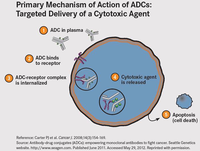 ADC-MOA-large