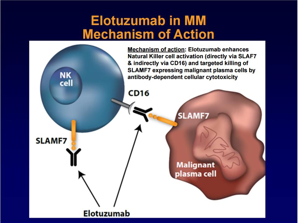 elotuzumab mechanism of action