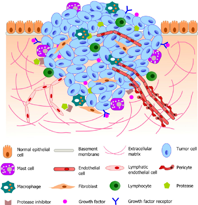 Figure 2. Schematic illustration of a typical tumor microenvironment. Cancer cells reside in a complex microenvironment containing various supporting cells, extracellular matrix (ECM) and a suite of signaling molecules. These environmental components collectively contribute to the tumor-stromal interaction and tumor progression. Adapted from (Joyce and Pollard, 2009; Koontongkaew, 2013). https://www.researchgate.net/figure/264674536_fig1_Fig-1-Schematic-illustration-of-a-typical-tumor-microenvironment-Cancer-cells-reside