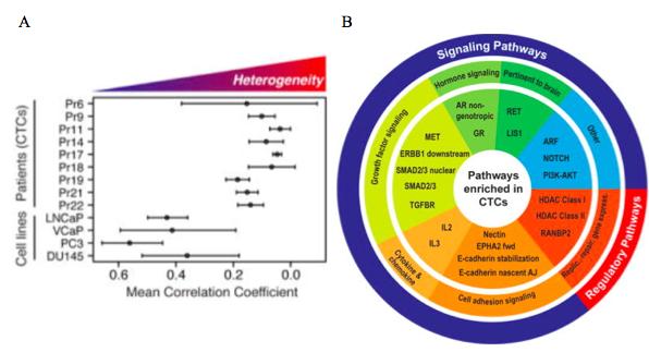 Figure 4: Single cell sequencing results. A) Correlation of expression levels between single circulating tumor cells and single cells from the same cell line. Heterogeneity between single circulating tumor cells within the same patient is higher than between single cells from the same cell line. B) Using bioinformatic software a graph of the key pathways that were upregulated in single cells can be constructed. (From Miyamoto et al, 2015). http://www.ncbi.nlm.nih.gov/pmc/articles/PMC4872391/#SD1