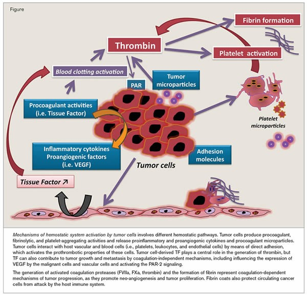 http://www.hematology.org/Thehematologist/Mini-Review/1244.aspx