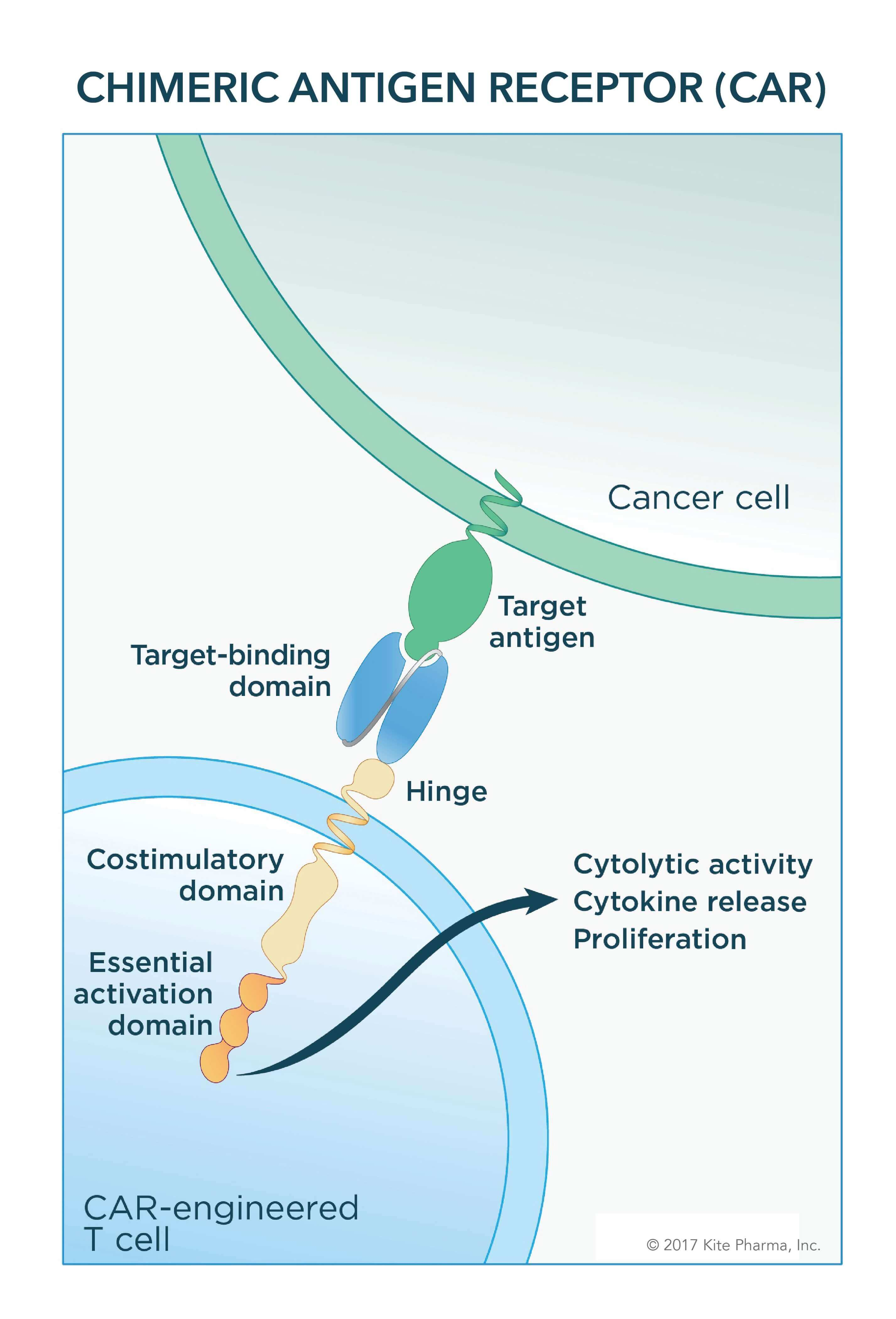 Car T Cell More Effective Than Standard Of Care In