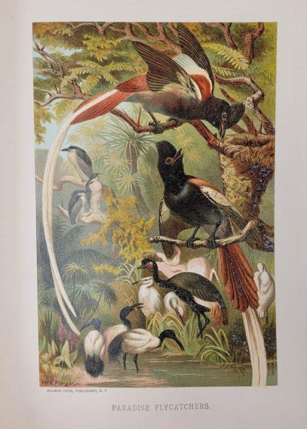 """Object of the Week: """"Animate Creation:  Popular Edition of 'A Living World;' A Natural History"""" by The Rev. J.G. Wood"""