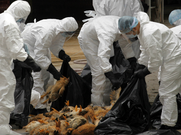 The Rise of A Deadly New Strain of Bird Flu: Has China Handled This Properly So Far?